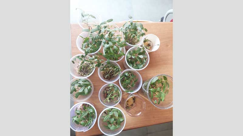 Seed Germination Activity