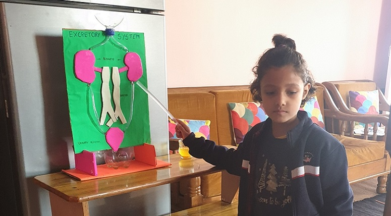 Grade II students created models on body systems